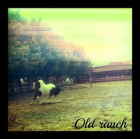 A.S.D. OLD RANCH